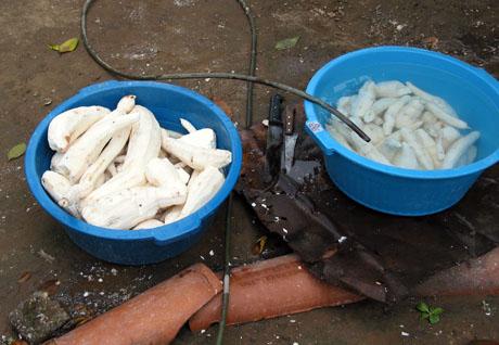 Manioc soaking