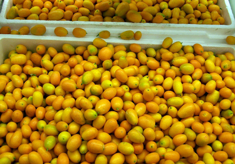 Kumquats are a symbol of the new year.