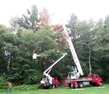 Dead-tree-two-trucks