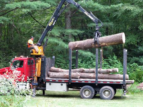 Dead-tree-log-truck