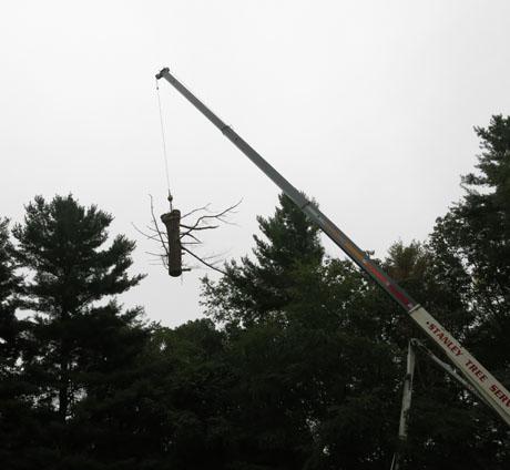 Dead-tree-flying