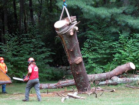 Dead-tree-trunk