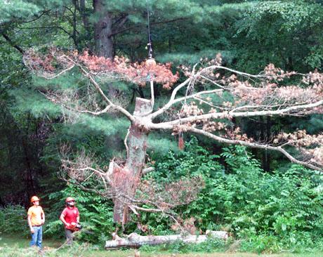 Dead-tree-section